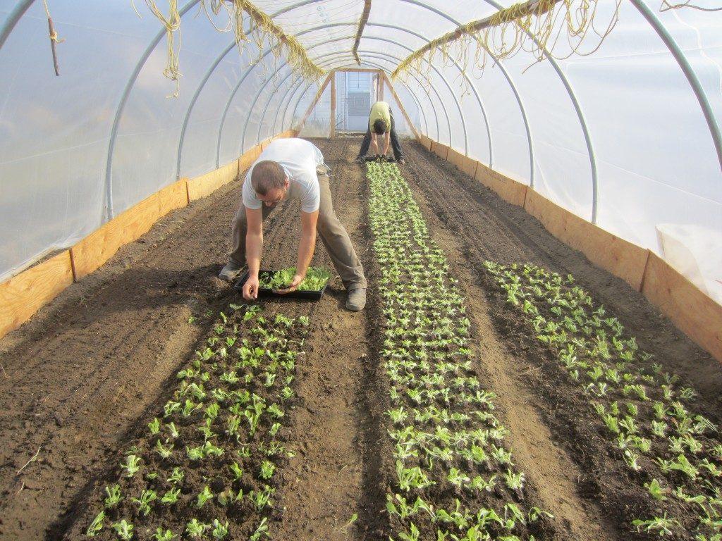SPIN-farming