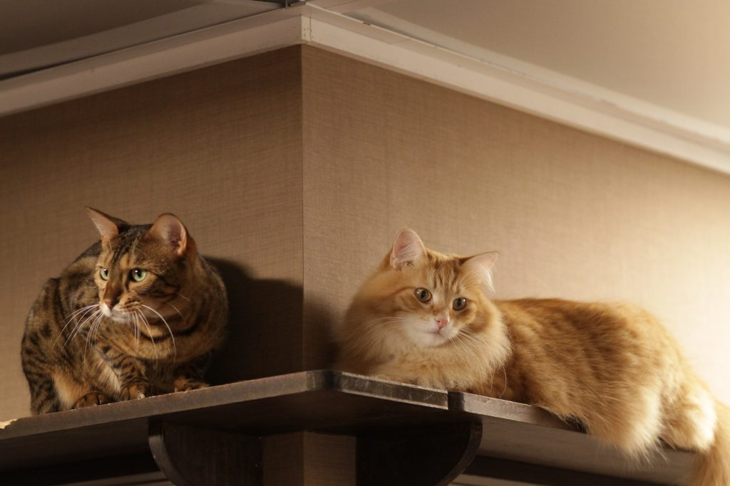 Two_Cats_in_a_Corner